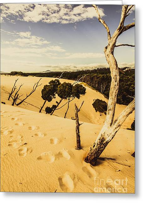 Tasmanian Desert Tree Landscape Greeting Card by Jorgo Photography - Wall Art Gallery