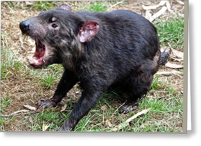 Tasmanian Devil Growl Greeting Card