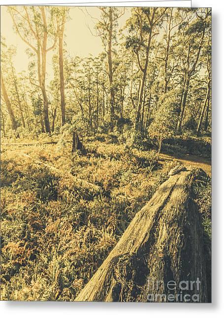 Tasmanian Forest Sunrise Greeting Card