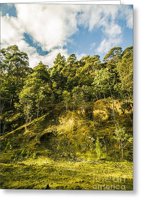 Tasmanian Rain Forest Glade Greeting Card by Jorgo Photography - Wall Art Gallery