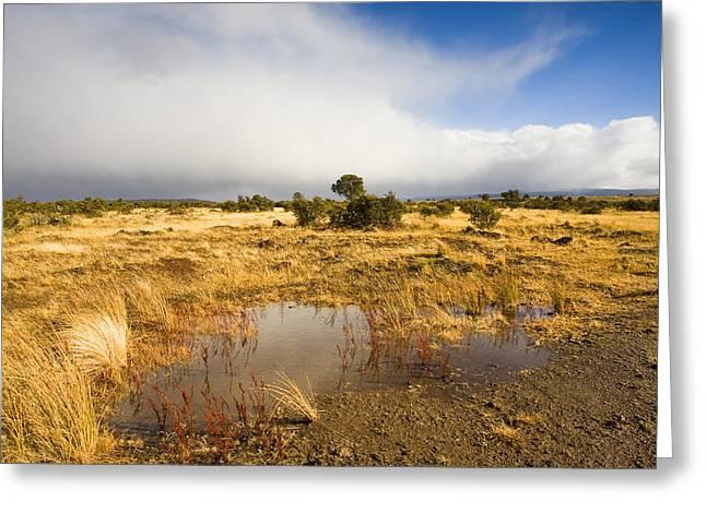 Tasmanian Storm  Greeting Card by Mike  Dawson