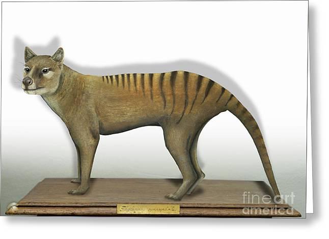 Tasmanian Tiger-thylacinus Cynocephalus-tasmanian Wolf-lobo De Tasmania-tasmanian Loup-beutelwolf    Greeting Card