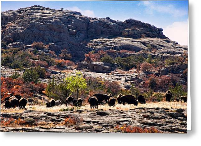 Recently Sold -  - Wildlife Refuge. Greeting Cards - Tatanka Greeting Card by Lana Trussell