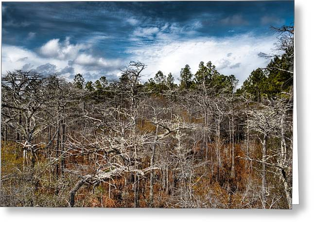 Tate's Hell State Forest Greeting Card by Rich Leighton