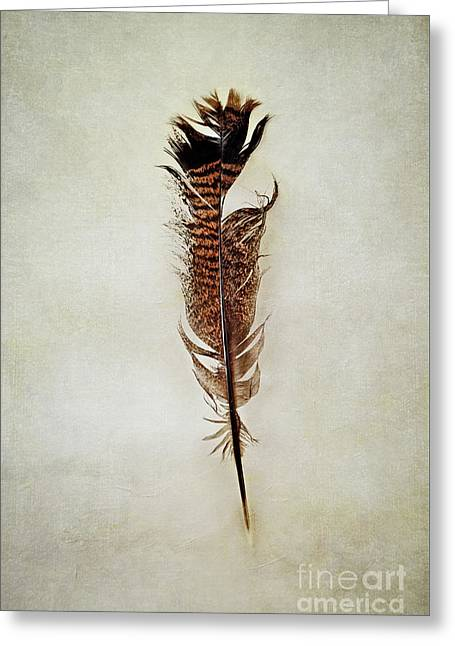 Greeting Card featuring the photograph Tattered Turkey Feather by Stephanie Frey