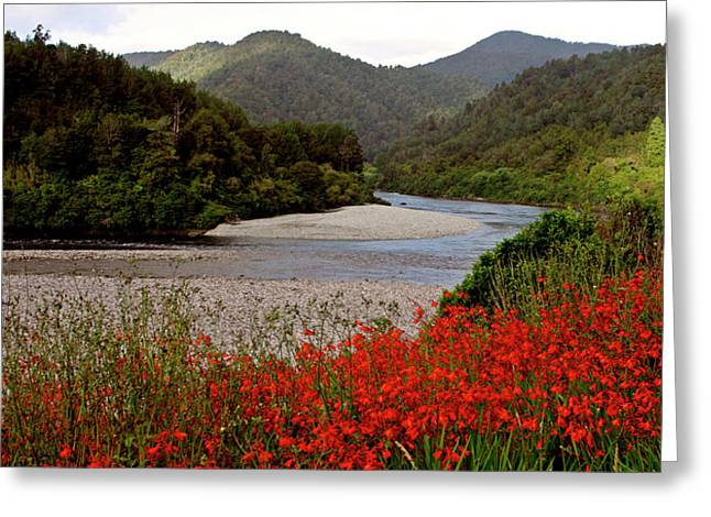 Taupo New Zealand River And Flowers Greeting Card