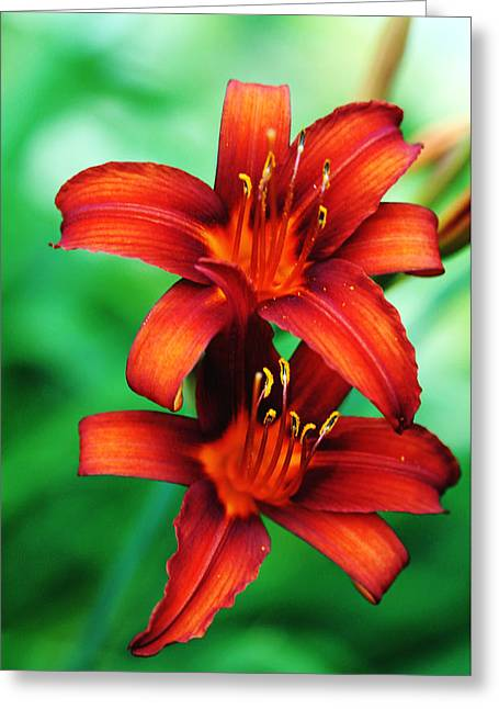 Tawny Beauty Greeting Card