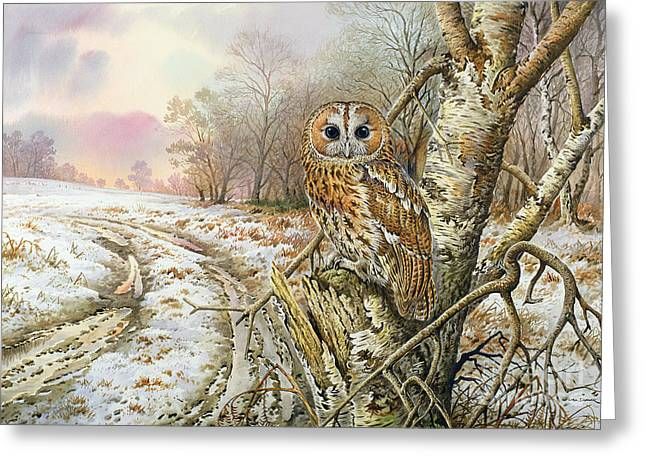 Tawny Owl Greeting Card by Carl Donner