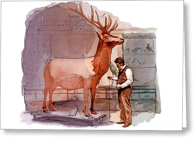 Taxidermist Greeting Card