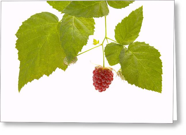 Horticulture Greeting Cards - Tayberry Greeting Card by Andy Smy