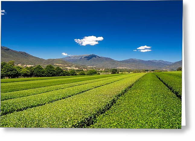 Tea In The Valley Greeting Card by Mark Lucey