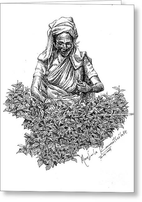 Tea Picker Greeting Card by Manjula Karunathilaka