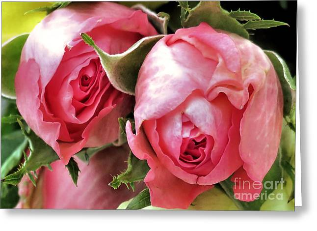 Tea Roses Greeting Card by Janice Drew