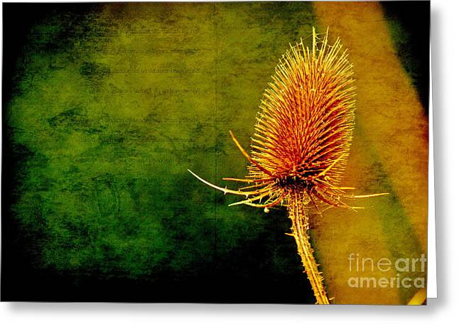 Greeting Card featuring the photograph Teasel Head by Dariusz Gudowicz