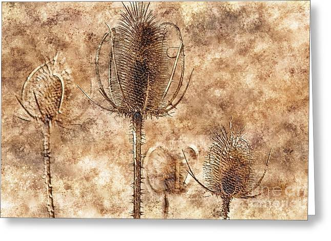 Greeting Card featuring the photograph Teasel Heads  by Dariusz Gudowicz
