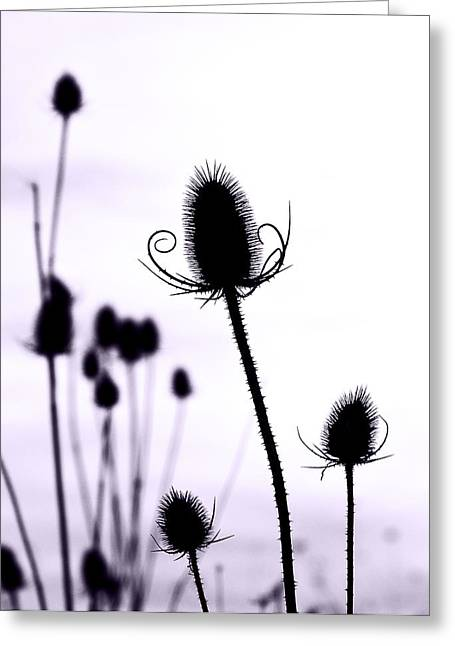 Teasels In A French Field  I Greeting Card by Gareth Davies
