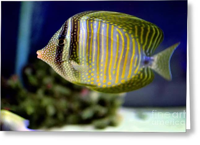Technicolor Fish Greeting Card by Madeline Ellis