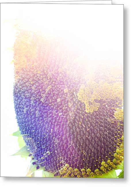 Greeting Card featuring the photograph Technicolor Sunflower by Christi Kraft