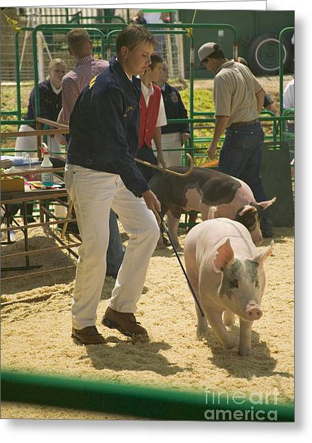 Teen Showing A Hog At A Fair Greeting Card by Inga Spence
