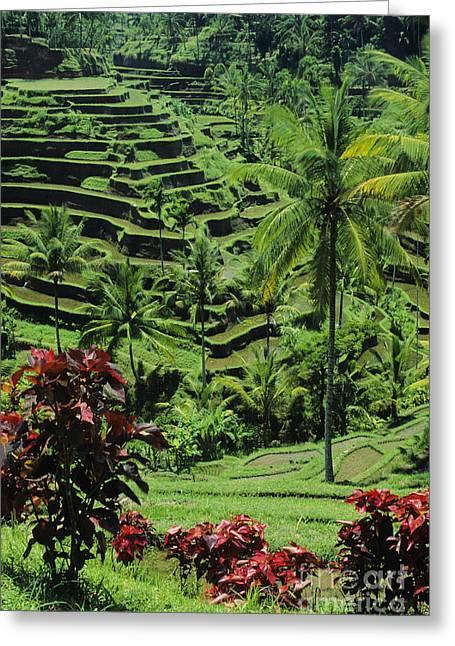 Tegalalang, Bali Greeting Card by William Waterfall - Printscapes