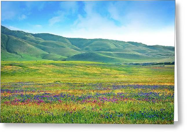 Tejon Ranch Wildflowers Greeting Card