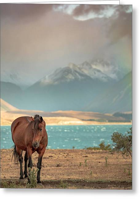 Tekapo Horse Greeting Card
