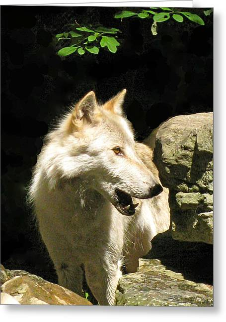 Wolf From The Forest Greeting Cards - Telling Greeting Card by Debra     Vatalaro