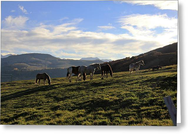 Telluride Mountain Herd Greeting Card by Marta Alfred