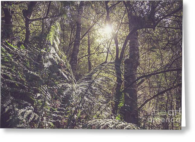 Temperate Rainforest Canopy Greeting Card