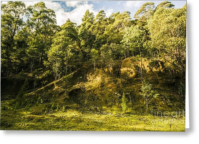 Temperate Rainforest Scene Greeting Card