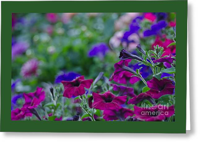 Temple Flowers Greeting Card by Nick  Boren