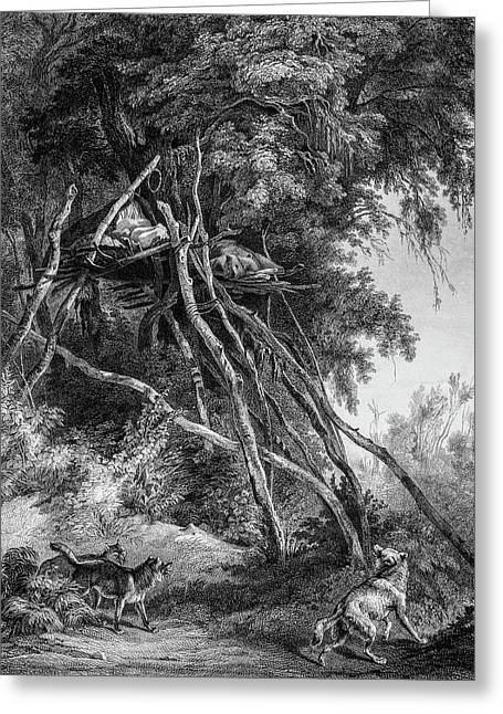 Temporary Tree Dwelling Greeting Card by Douglas Barnett