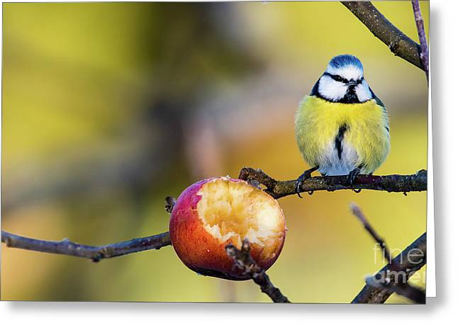 Greeting Card featuring the photograph Tempting by Torbjorn Swenelius