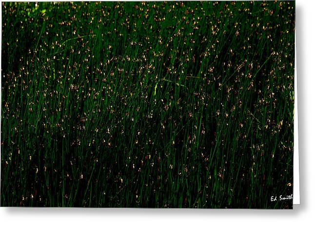Ten Thousand Fire Flies Greeting Card by Ed Smith