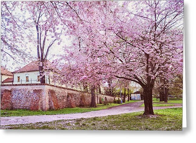 Tender Spring In Brno Greeting Card