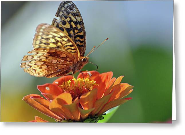 Greeting Card featuring the photograph Tenderness by Glenn Gordon