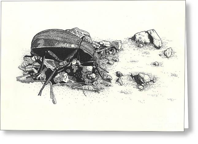 Darkling Beetle Greeting Card