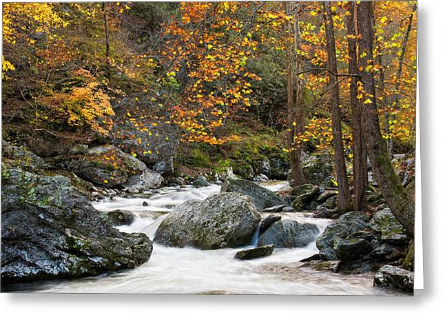 Tennessee Colors Greeting Card by Brad Hoyt