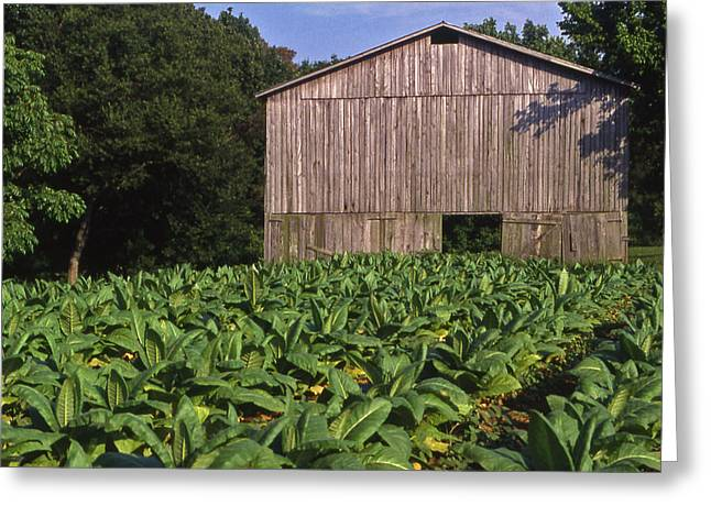 Natchez Trace Greeting Cards - Tennessee Tobacco Barn Greeting Card by Randy Muir