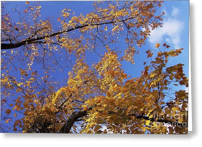 Tennessee Tree 1 Greeting Card