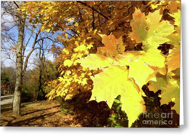 Tennessee Trees 2 Greeting Card