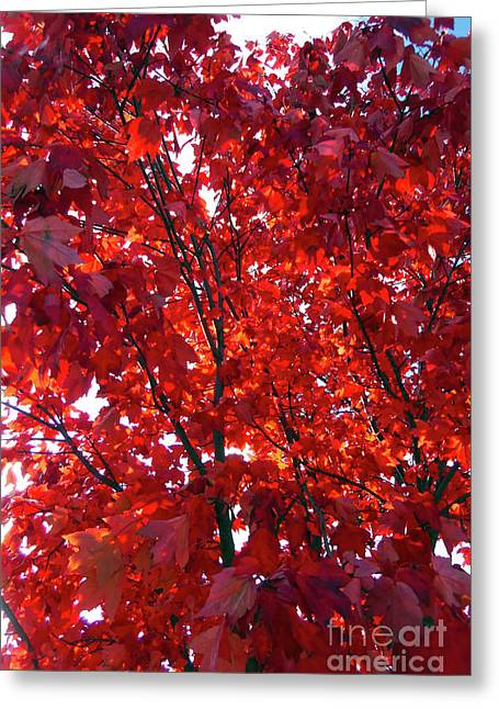 Tennessee Trees 3 Greeting Card