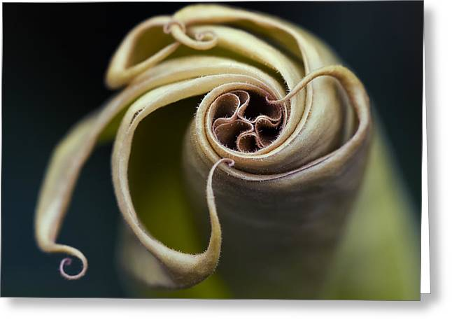 Tentacles Greeting Card by Margaret Barry