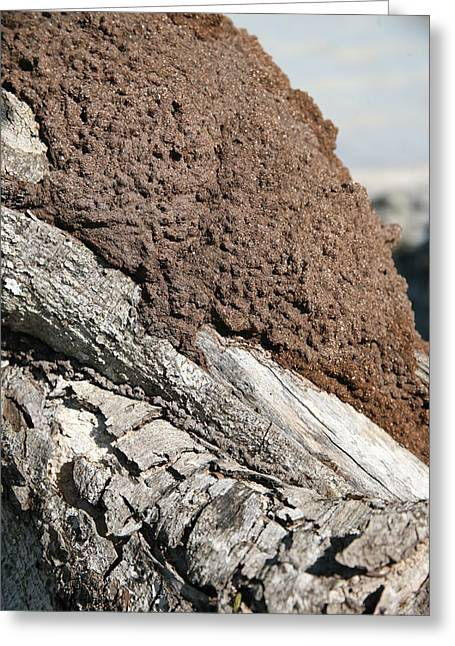 Termite Nest Greeting Card by Steve Madore