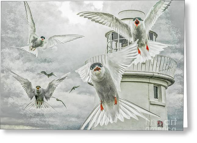 Tern Attack Greeting Card