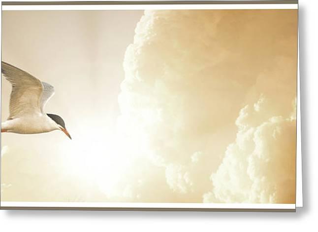 Tern In Flight, Spiritual Light Of Dusk Greeting Card