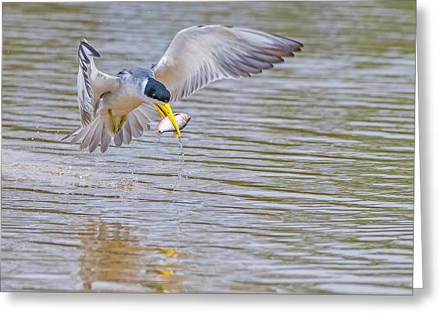Greeting Card featuring the photograph Tern by Wade Aiken