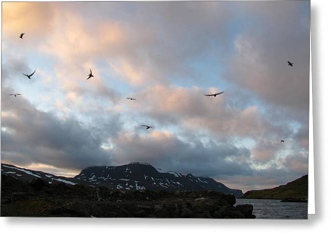 Terns At Midnight Greeting Card by Sidsel Genee