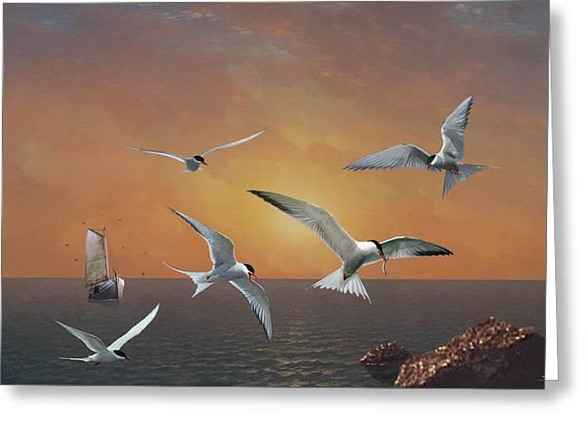 Terns In The Sun Greeting Card