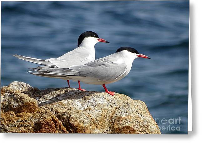 Terns On A Rock Greeting Card by Lainie Wrightson